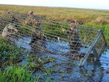 crocodile-harvesting-1.jpg