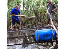 crocodile-harvesting-2009-2.jpg