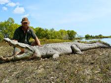 crocodile-harvesting-2009-7.jpg