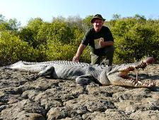 crocodile-harvesting-7.jpg