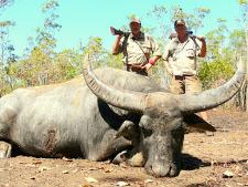 water-buffalo-hunting-4.jpg