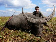 water-buffalo-hunting-safaris-20.jpg