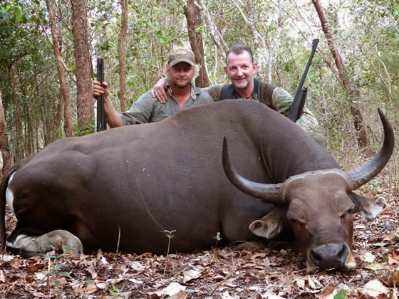 Banteng Hunting Safaris